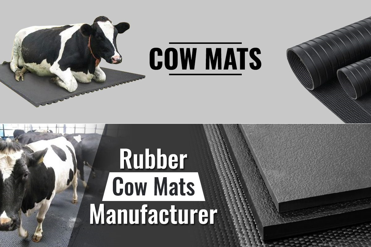Cow mats in Delhi, India